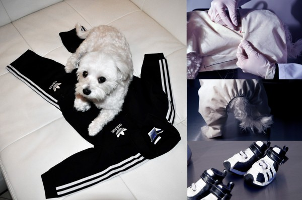 Luxirare Adidas Track Suit rebuilt to fit her dog Rocky