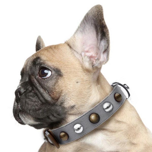 beautiful french bulldog in Milk & Pepper Greyballs collar