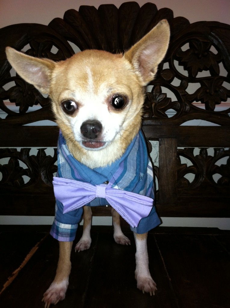 Mr. Bernard PupStyled in The Rover Boutique Angle Shirt