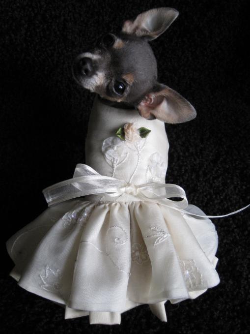 Custom Couture Dog Wedding Dresses Pupstyle Com